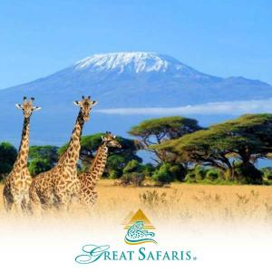 Up to 50% Companion Discount + Free International Air on Select Safaris