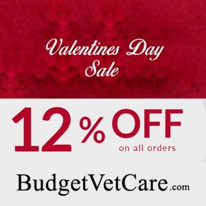 12% Discount on All Orders in Valentine's Day Sale
