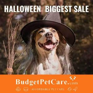 Halloween Sale: 12% Off All Orders + 10% Cashback