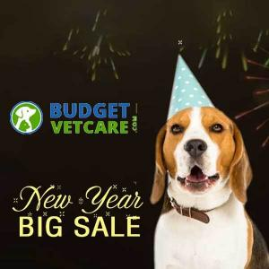 New Year Big Sale: 20% Off All Orders