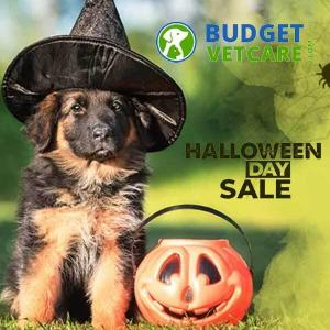 Halloween Sale: 15% Off All Orders With Code