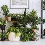 15 Great Plants That Are Easy To Take Care Of