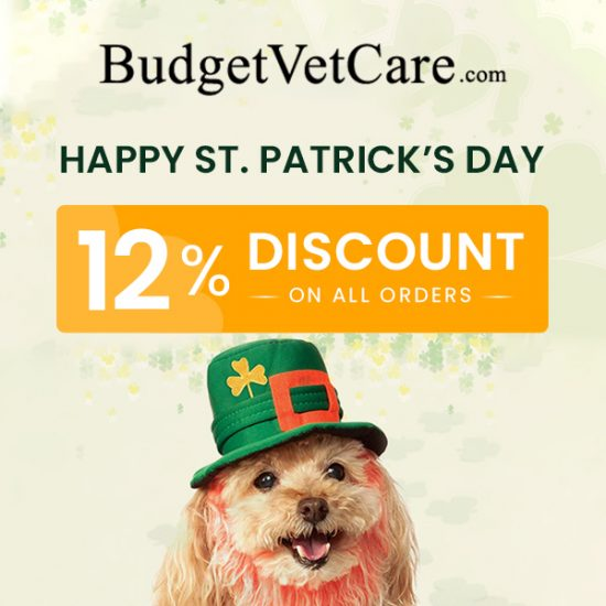 St. Patrick's Day Sale: 12% Discount On All Orders