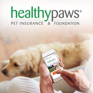 Save Up to 90% on Vet Bills + Get Up to 5% Off Premium Pet Insurance