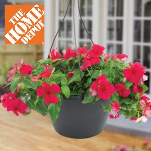 2 For $10 Classic Hanging Baskets