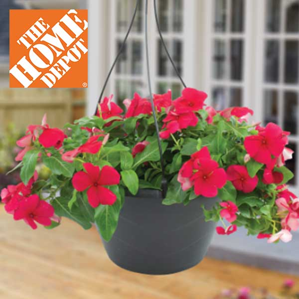 2 For 10 Classic Hanging Baskets Senior Discounts Club