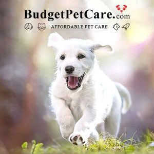 Flea & Tick Sale: 10% Off All Orders & Earn 10% Cashback